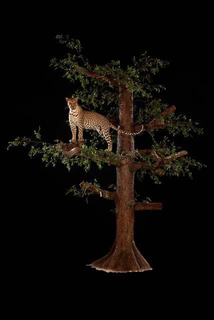 wildlife016