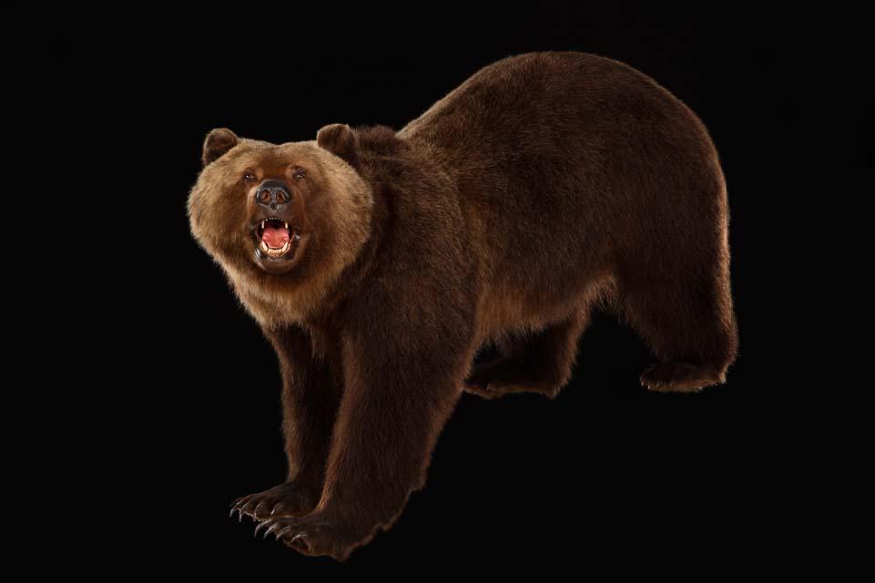 wildlife018
